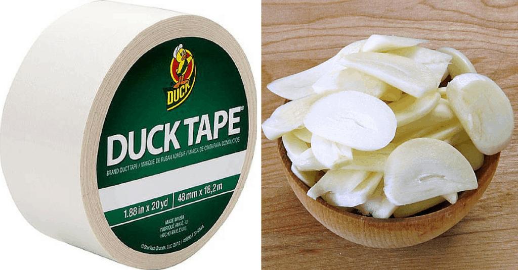 Garlic-Ducttype
