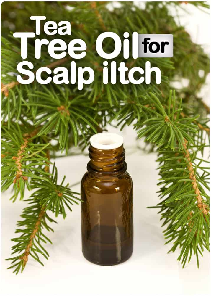 Tea Tree Oil For Scalp Iltch