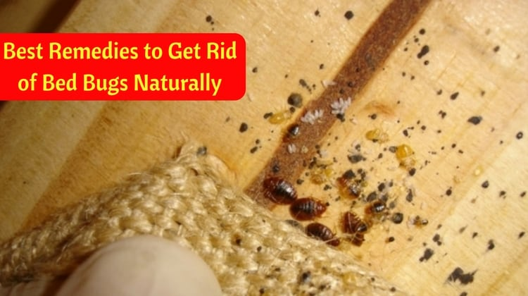 9 Best Remedies to Get Rid of Bed Bugs Naturally