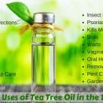 20 Amazing Uses of Tea Tree Oil in the Daily Life