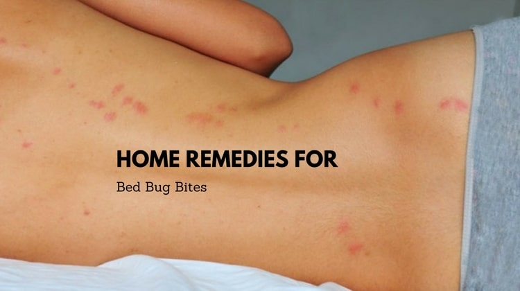 in nc bed for bug treatments home bugs news remedies and charlotte extermination