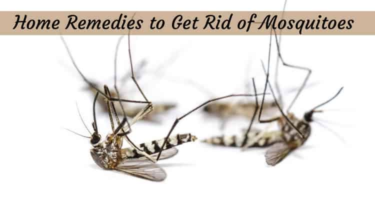 Home Remedies to Get Rid of Mosquitoes