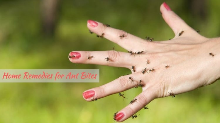 Effective Home Remedies for Ant Bites