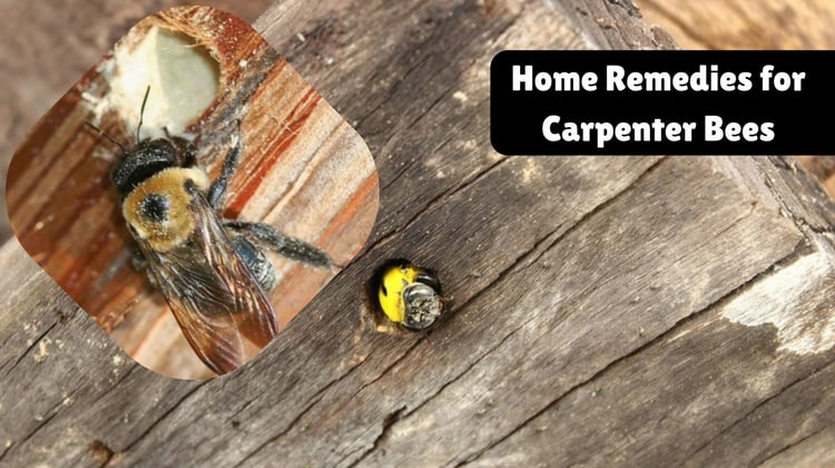 Home Remedies for Carpenter Bees